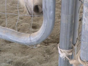 Unsafe gate: notice the Weena snoot hovering near the place she can get in the most trouble.