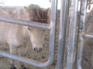 Weena da Queena, equine product safety engineer