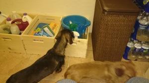 helpfuldogs