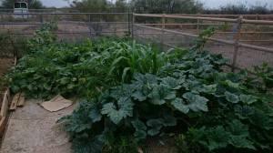 Garden9915