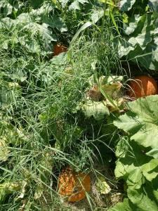 vinesandgrass